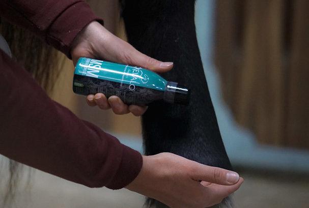 Anwendung des MSM Regenerationsgels von CXEVALO Pferdepflege